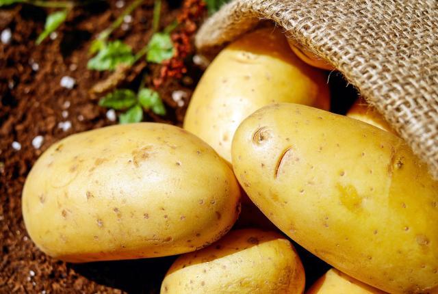 Pommes de terre Bintje pour frites belges