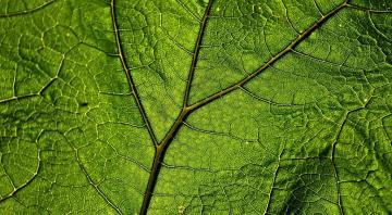 Installation scènocosme : Phonofolium