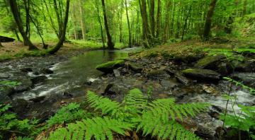 Le coeur vert de l'Ardenne