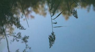 Sortie nature : La petite faune des mares à la réserve de Bois-en-Val
