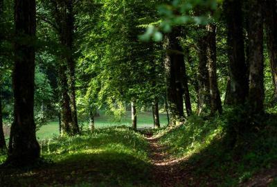 Sortie nature : J'agis pour l'environnement !
