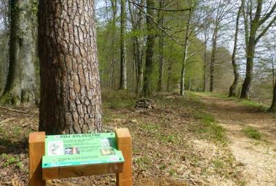 Arboretum de Vrigne Aux Bois
